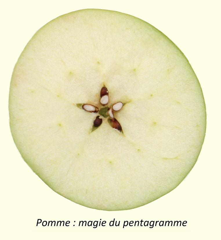 [Jeu] Association d'images - Page 39 Pentagramme-1